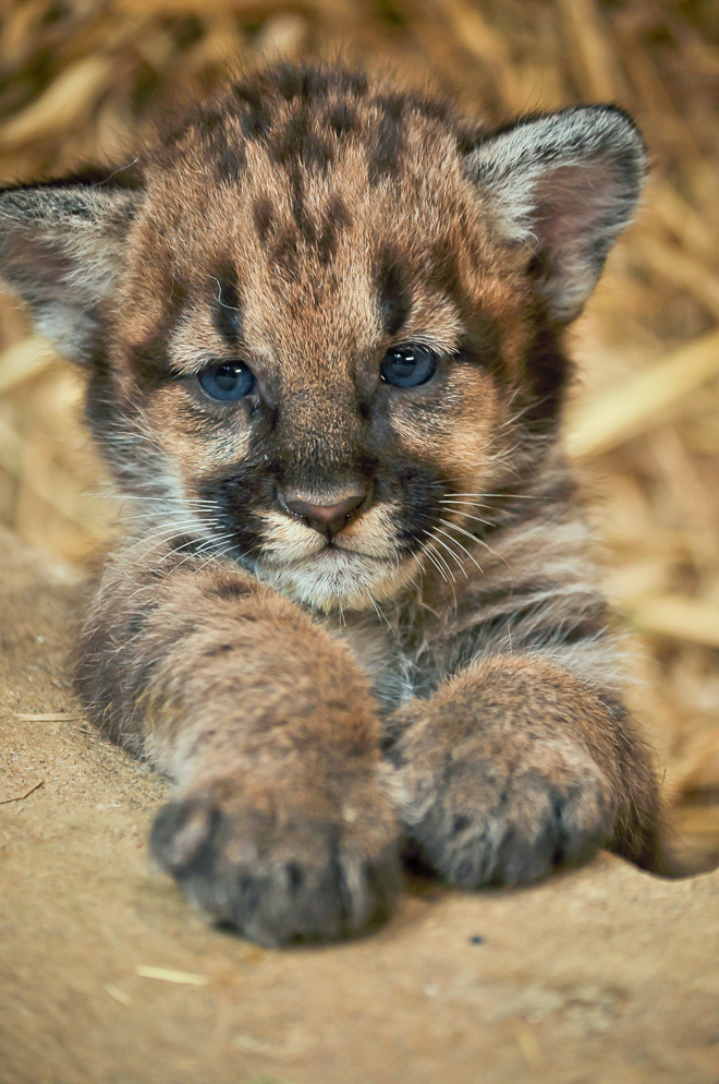 Images of wild baby animals - photo#3