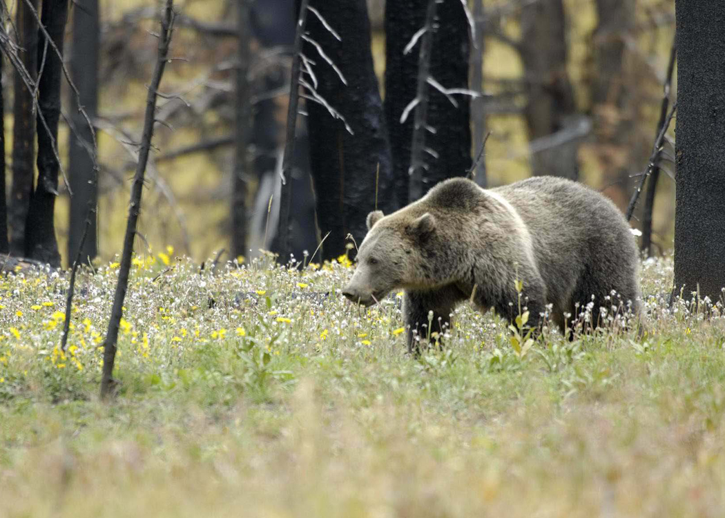 Republicans Aim to Gut Endangered Species Act